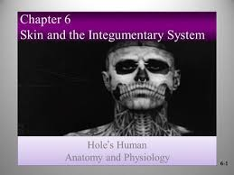 Human Anatomy Integumentary System Principles Of Human Anatomy And Physiology 11e1 Chapter 5 The