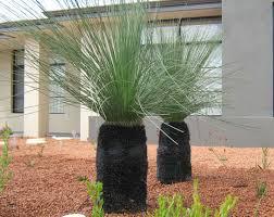 native australian plants native plants grasstrees australia
