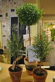 Rosemary Topiary 9 Best Myrtle Topiary Images On Pinterest Topiaries Florists