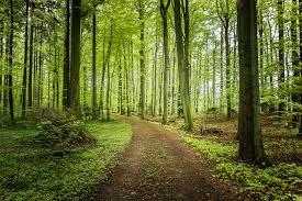 road forest trees landscape f hd wallpaper 2484297