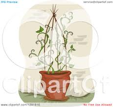 clipart of a potted vine plant growing up a trellis royalty free