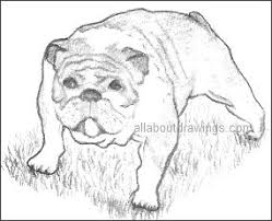 bulldog drawings in black and white