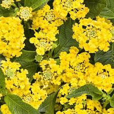 378 best garden design images on pinterest allen smith flower