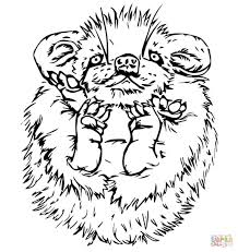 cute baby porcupine coloring page free printable coloring pages