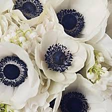 white and blue flowers september 2017 what are your colors