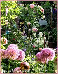 129 best allium images on pinterest flowers flower gardening
