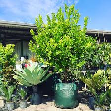 native plant nursery perth lena nursery u0026 garden centre home facebook