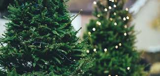 no live christmas trees from ikea this year kl expat malaysia