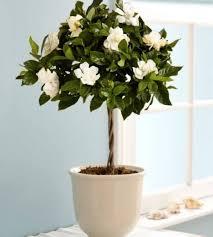 Fragrant Indoor House Plants - best 25 best plants for bedroom ideas on pinterest plants