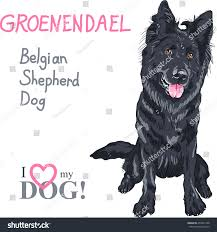 belgian shepherd dog vector dog belgian shepherd dog groenendael stock vector 250441768