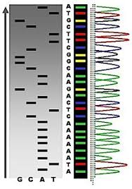 dna mapping dna sequencing