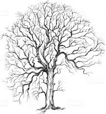 Oak Tree Drawing Winter Tree Drawing Stock Vector Art 165498361 Istock