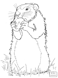 Coloring Pages Groundhog Standing Up Groundhogs Mammals Groundhog Color Page
