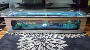 new coffee table fish tank youtube
