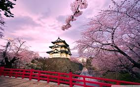 meiji cherry blossom tree u2013 a must have this 2014