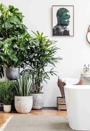 Wohnzimmer Einrichten Pflanzen Mit Diesen Pflanzen Fürs Bad Eine Tropische Wohlfühloase Einrichten