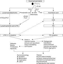 inflammatory pathways in female reproductive health and disease