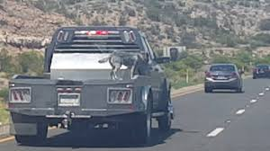Truck Bed Dog Crate Dog Riding On The Back Of An Open Bed Truck At 80 Mph Youtube