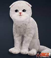 black desert grey moon cat orcz com the wiki