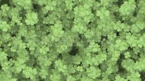 four leaf clover background stock motion graphics youtube