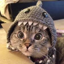 Halloween Costumes Cat Hat 11 Quick Easy Diy Halloween Costumes Cat