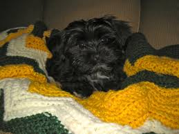 affenpinscher reviews cr puppy love your breeder network finder working to place the