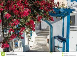bougainvillea trellis and white washed buildings in greece stock