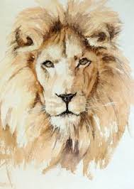 colorfull lion wallpapers lions wallpaper artsy