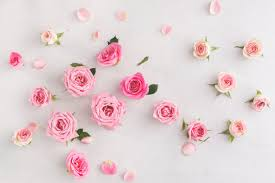 Meaning Of Pink Roses Flowers - what valentine u0027s day flowers really mean bt