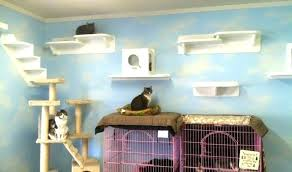 cat wall furniture cat shelves cat shelves shelves for cats wall mounted cat shelves