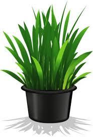 2034 best flowers u0026 plants images on pinterest clip art