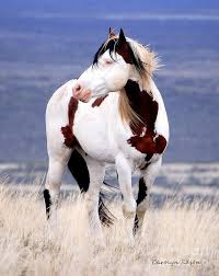 71 best mustang images on pinterest pretty horses beautiful