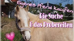 Suche Kaufen Eigenes Pferd Kaufen Die Suche U0026 Das Probereiten Youtube