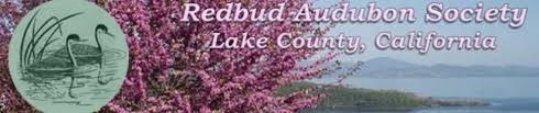 Audubon Backyard Bird Count by Great Backyard Bird Count February 12 15 2016 Redbud Audubon