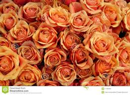 bulk roses bulk of roses on a market stock images image 11485924