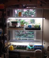 anyone here do indoor vegetable gardening year round under shop