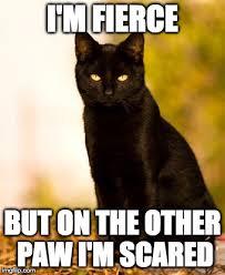 Cat Sitting Meme - black cat sitting memes imgflip