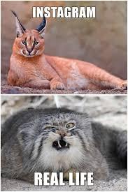 Cat Instagram Instagram Vs Reality Imgur