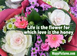 Pictures Of Beautiful Flowers In The World - beautiful flowers pictures in the world wapppictures com