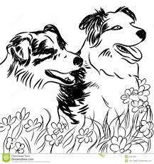 coloring pages border collie coloring pages breadedcat free
