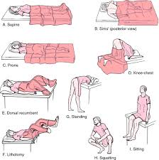Picture Of Anatomical Position Anatomical Position Definition Of Anatomical Position By Medical