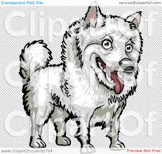 american eskimo dog vector royalty free rf clipart illustration of a friendly white