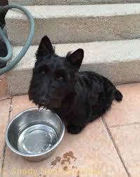 puppy u0027s first haircut