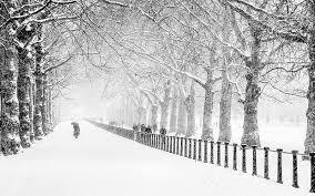 winter snow park city road trees free desktop
