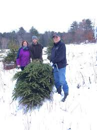 river lily farm in ogunquit maine cut your own christmas tree