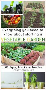 best 25 vegetable garden tips ideas on pinterest starting a