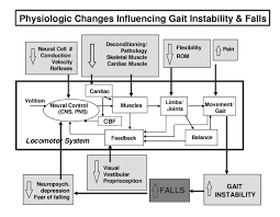 gait variability methods modeling and meaning journal of