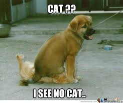 No Meme Cat - cat i see no cat do u see cat by war95 meme center
