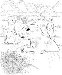 grassland coloring pages many interesting cliparts