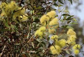 australian garden flowers garden delights today u0027s flowers australian natives